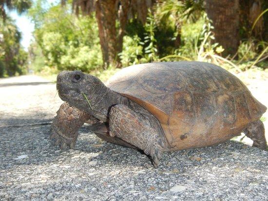 Island Boat Adventures : tortoise