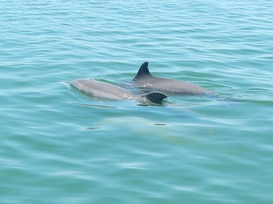 Island Boat Adventures : dolphins