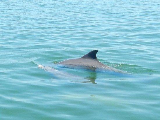 Island Boat Adventures : Dolphin