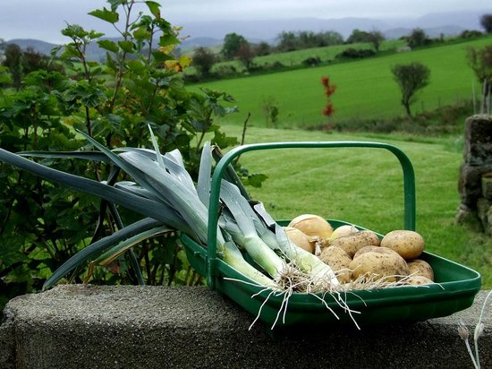 Turnip House: We use home grown produce when we can