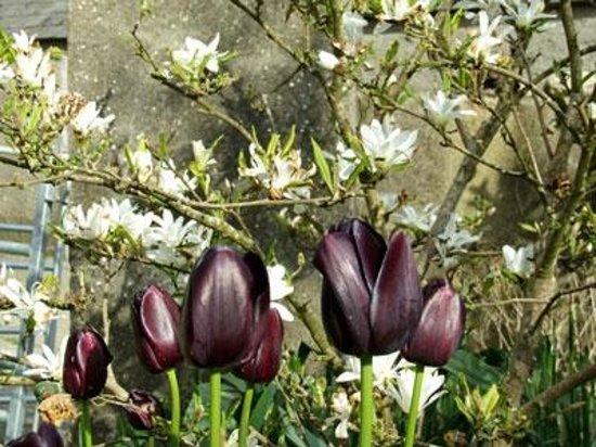 Turnip House: A walk round the garden