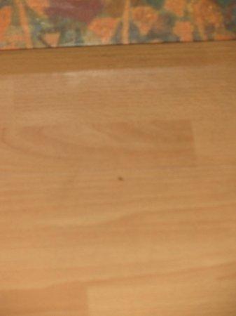 Britannia Hotel: formiche in camera