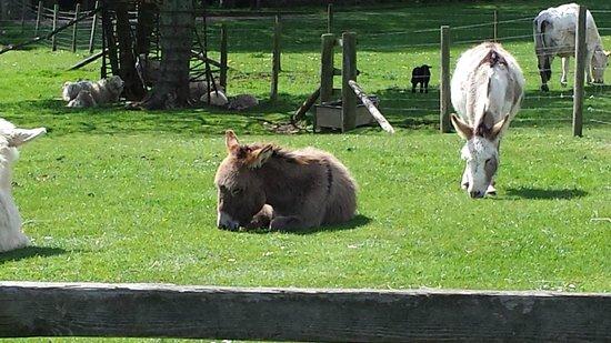 Cotswold Farm Park: donkeys