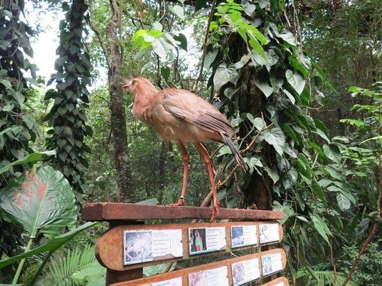 e2b64976c09 Como a natureza nos encanta!!! - Foto de Parque das Aves