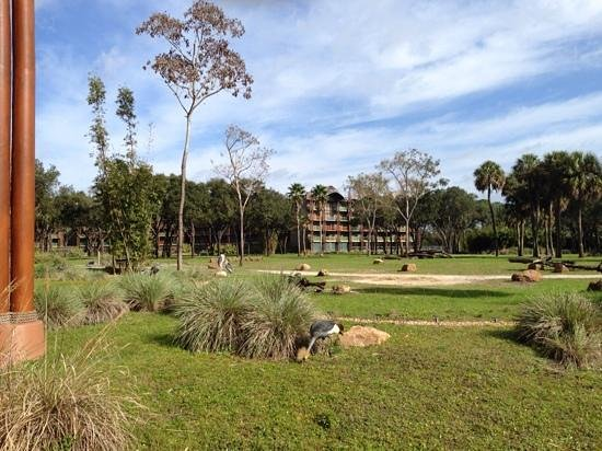 Disney's Animal Kingdom Lodge: Animal kindo