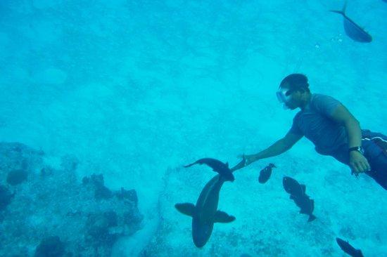 Cozumel Tours By Johann & Sandra : Our guide feeding fish