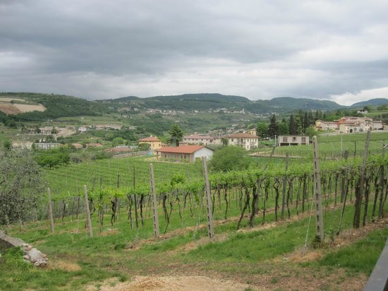 Veronaround Tours: Visiting the Vogadori Vineyard in Valpollicella.