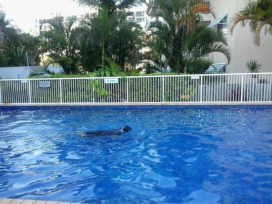 Surf Parade Resort: swimming