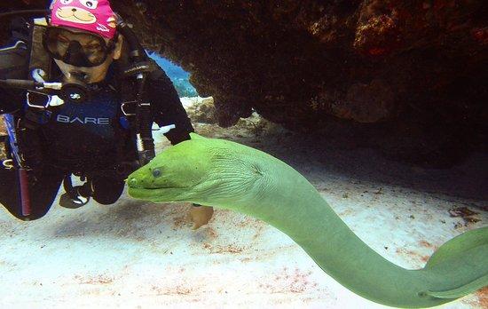 Pepe Scuba Dive Shop: Abdius and the eel