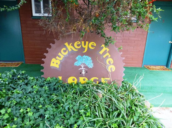 Buckeye Tree Lodge : This is actually a saw blade!