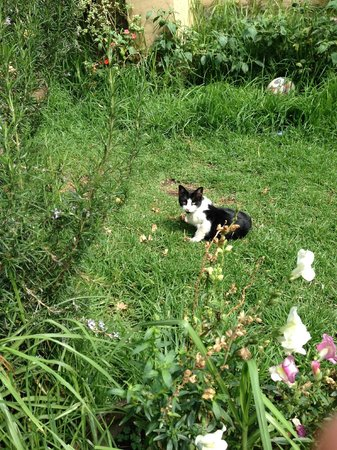 Hostal Los Andenes: Pretty kitty playing in the garden