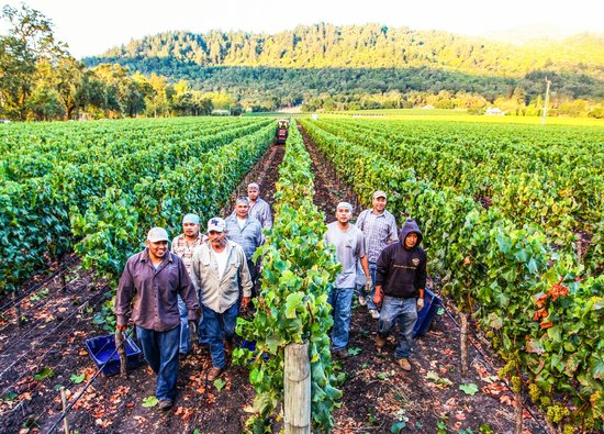 Staglin Family Vineyard: The Vineyard and Crew