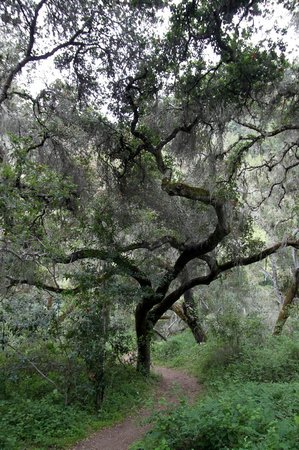 Garland Ranch Regional Park: gnarly