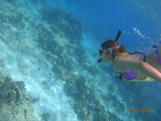 Hotel Riu Palace Aruba Snorkel Palm Beach