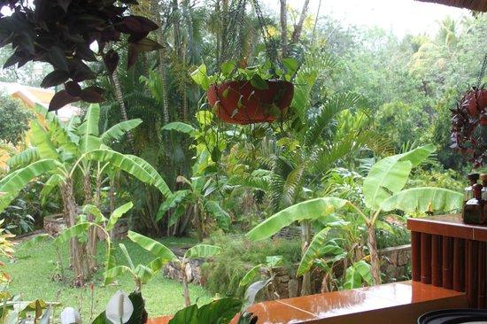Cenote Ik kil: jardin