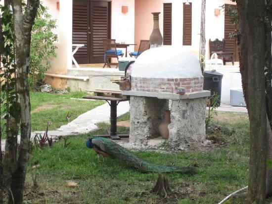 Villas El Encanto: oven we used