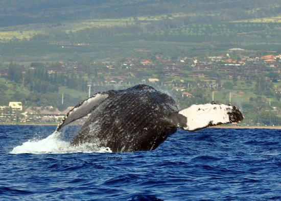 Ultimate Whale Watch & Snorkel : the mother