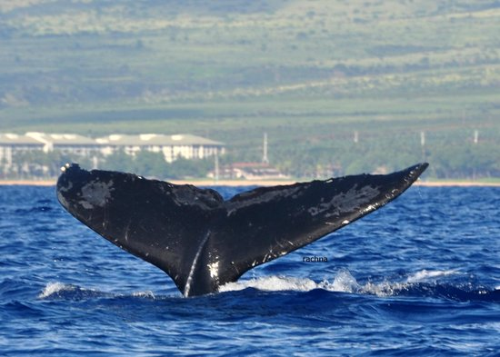 Ultimate Whale Watch : another one