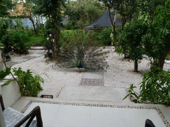 Villas El Encanto: off the front door