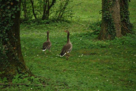 Hotel Schloss Leopoldskron: Ducks