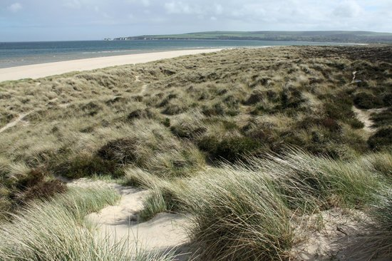 Studland Bay, UK: Studland dunes and beach