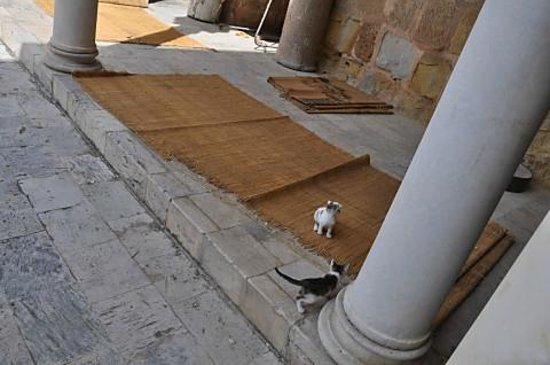 Zitouna Mosque : モスク内の子猫