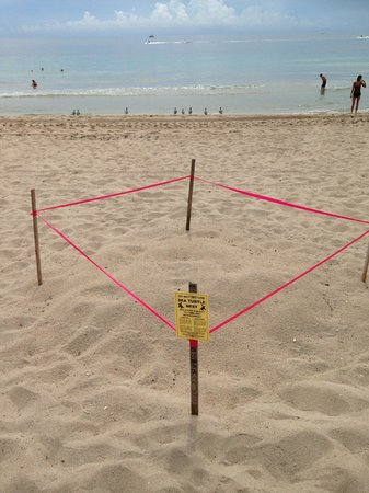 La Casa Del Mar: Turtle nesting right on the beach one block away.