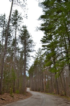 Springwater Provincial Park: Road into the park