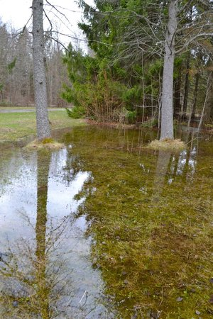 Springwater Provincial Park: Reflections in the spring melt water
