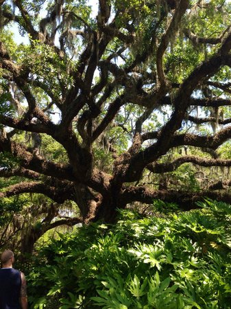 Brookgreen Gardens: Mesmerizing.
