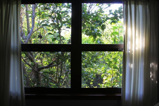 Hamanasi Adventure and Dive Resort: Trees all around - no matter which window you looked out of