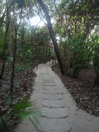 Hamanasi Adventure and Dive Resort: Path to our treehouse