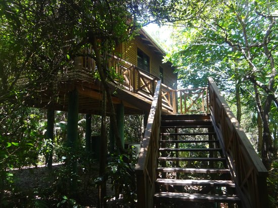 Hamanasi Adventure and Dive Resort : Stairs to our treehouse