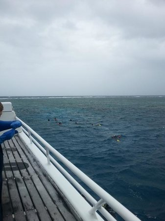 Poseidon Outer Reef Cruises : Rainy day, but the reef was still amazing!