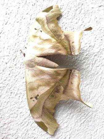 Celeste Mountain Lodge: papillon de nuit