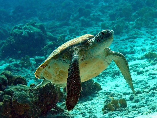 Bonaire Oceanfront Apartments: Green Turtle
