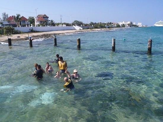Stingray Beach: alimentando araias com navio ao fundo