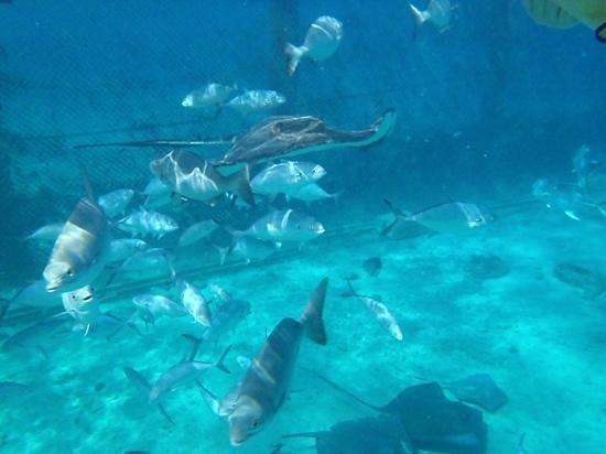 Stingray Beach: foto sub mergulho