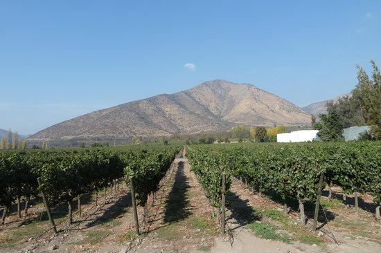 Maipo Alto Wine Route
