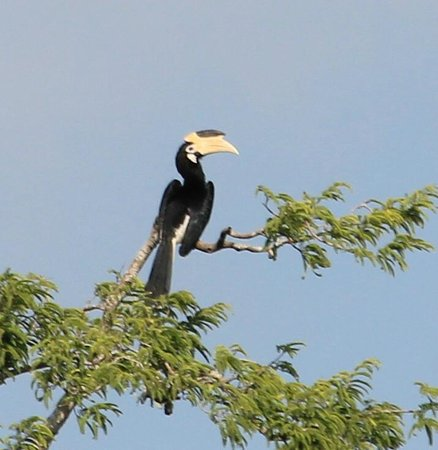 Leopard Trails Camp Sri Lanka : Exotic Birds
