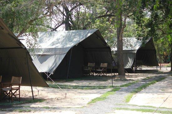 Leopard Trails Camp Sri Lanka : Tent Area