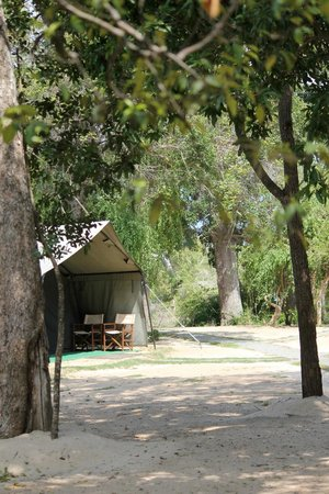 Leopard Trails Camp Sri Lanka : Our Tent Was On The Other Side Of The Row Of Tents