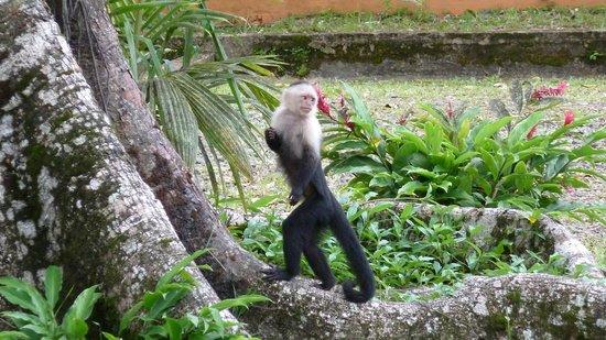 """National Park Gorgona: Die Insel ist eigentlich """"Eigentum"""" der Affen"""
