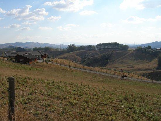 Kauri Lodge & resident horses