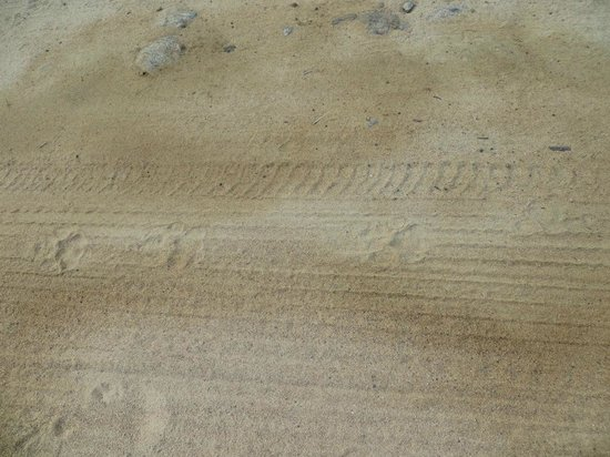 Cinnamon Wild Yala: Spot the leopard prints around the lake, in the morning