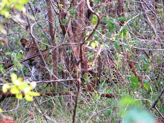 Cinnamon Wild Yala: Spot the leopard on safari