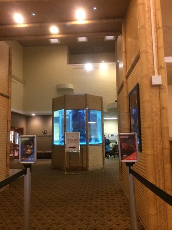 Liki Tiki Village : Lobby