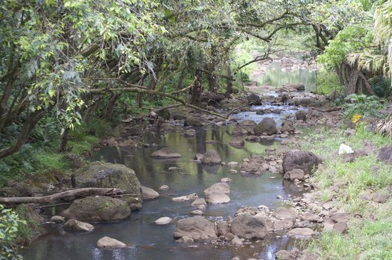 Waimea Valley: River on the way up