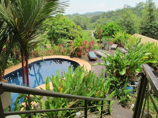Nanga Damai Homestay : Pool