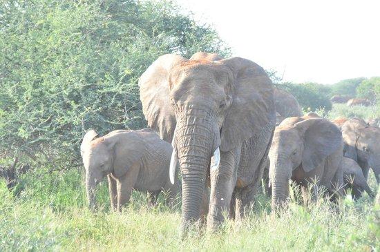 Three Cities Madikwe River Lodge: elephant group